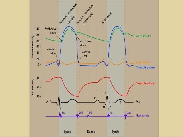 Cardiac cycle cardiac cycle the cardiac cycle describes ccuart Gallery