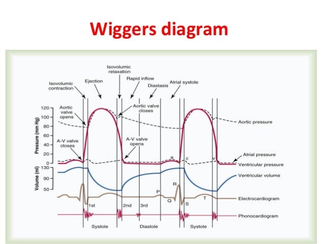 Steps for wiggers diagram wiring diagram for light switch cardiac cycle physiology 4 dpt rh slideshare net wiggers diagram ekg wiggers diagram explanation ccuart Images