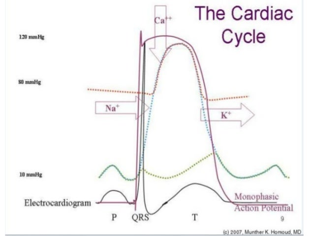 Cardiac cycle ppt 2 11 cardiac cycle ccuart Image collections