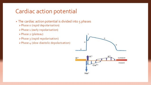 Physiology of cardiac conduction and contractility