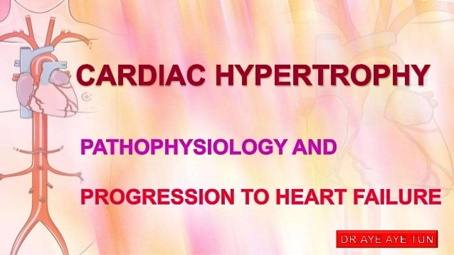 Cardiac Structure and Specializations  0.4% to 0.5% of body weight  250 to 320 gm in female & 300 to 360 gm in male  wa...