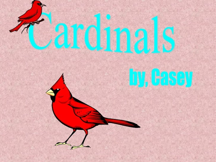 Cardinals by, Casey