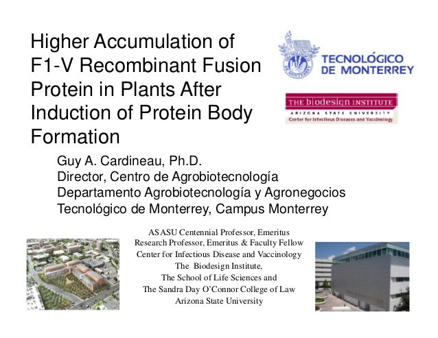 Guy A. Cardineau, Ph.D.Higher Accumulation ofF1-V Recombinant FusionProtein in Plants AfterInduction of Protein BodyFormat...
