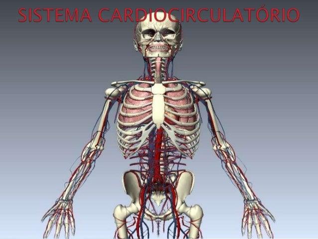 O sistema respiratório fornece oxigênio e remove gás carbônico do organismo, auxiliando as células no metabolismo, atuando...