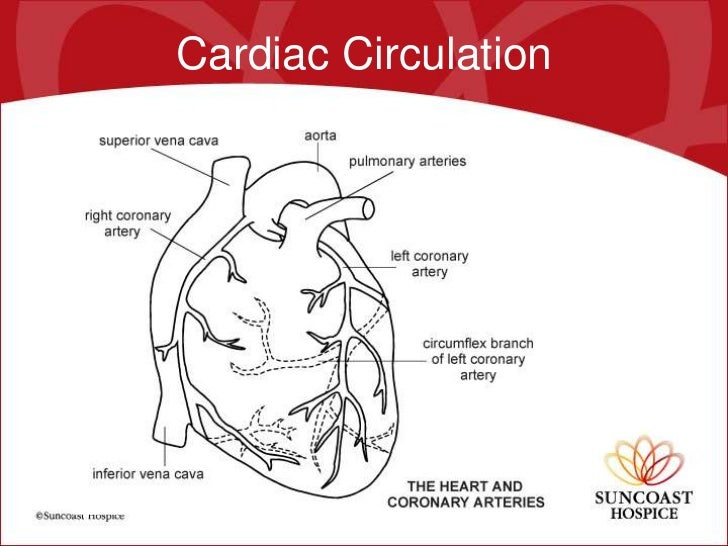 Cardiopulmonary Disease By Deirdre Woods Md