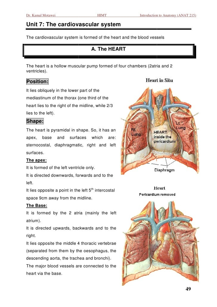 Dr. Kamal Motawei                          HIMT          Introduction to Anatomy (ANAT 215)Unit 7: The cardiovascular syst...