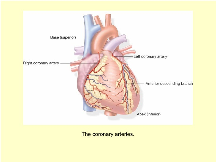 Primary And Secondary Prevention Of Coronary Artery Disease Autos Post