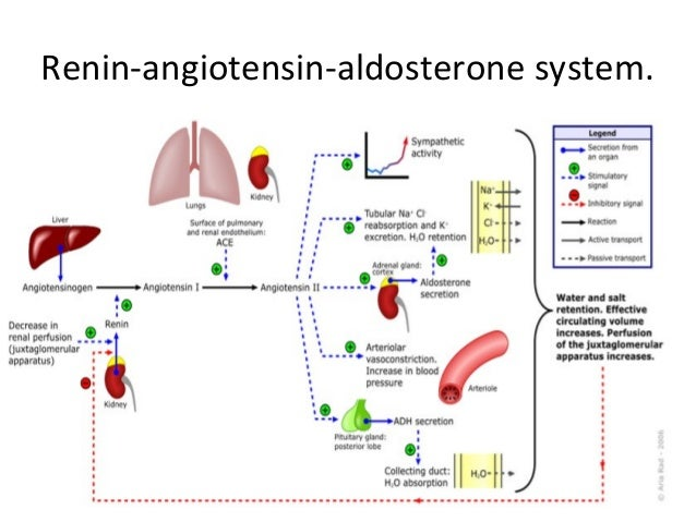 aldosterone and renin relationship tips