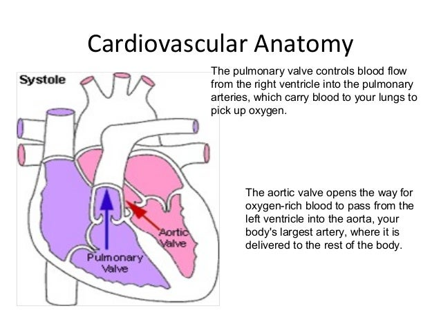 cardiovascular physiology With aging there are changes in the cardiovascular system, which result in alterations in cardiovascular physiology the changes in cardiovascular physiology must be differentiated from the effects of pathology, such as coronary artery disease, that occur with increasing frequency as age increases.