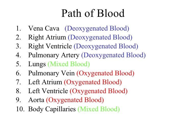 Path of Blood <ul><li>Vena Cava  (Deoxygenated Blood) </li></ul><ul><li>Right Atrium  (Deoxygenated Blood) </li></ul><ul><...