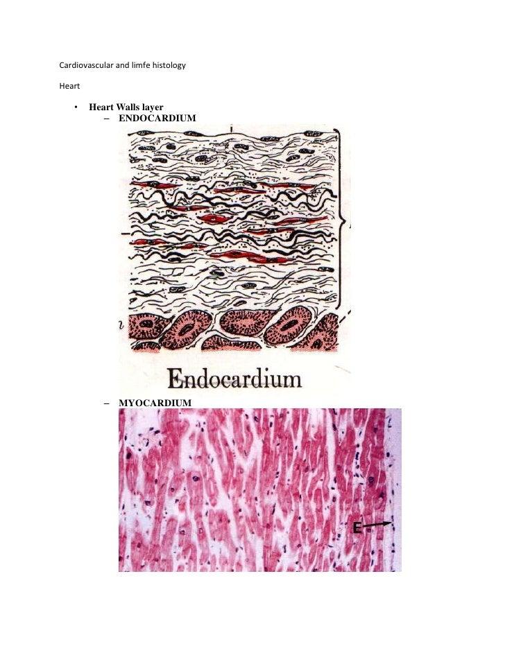 Cardiovascular and limfe histologyHeart   •    Heart Walls layer           – ENDOCARDIUM           – MYOCARDIUM