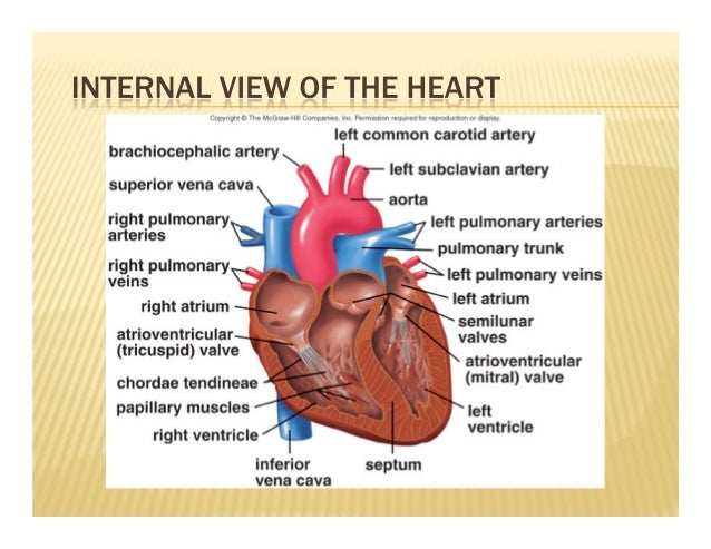 bio 250 cardio heart Open heart surgery  bio-chemistry department sno code no name of investigations /  rs 250/- 12 cardio-12 signal averaged ecg rs 600/.