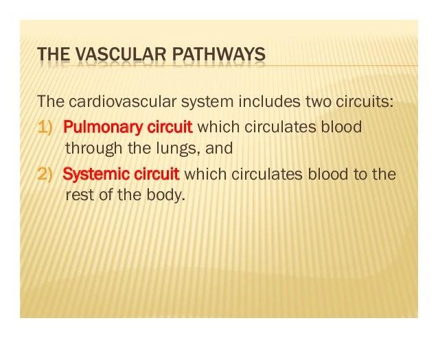Biology 12 Cardiovascular System