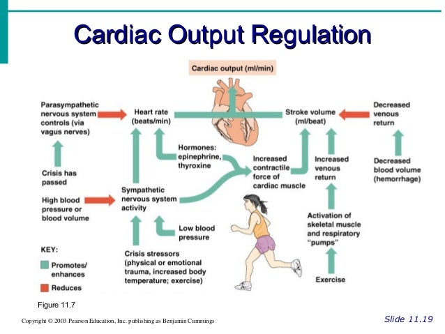 how to find out cardiac output