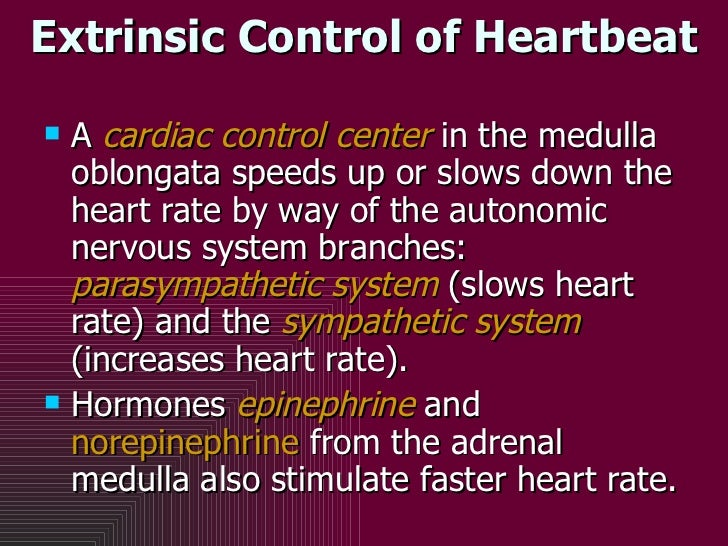 Extrinsic Control of Heartbeat <ul><li>A  cardiac control center  in the medulla oblongata speeds up or slows down the hea...