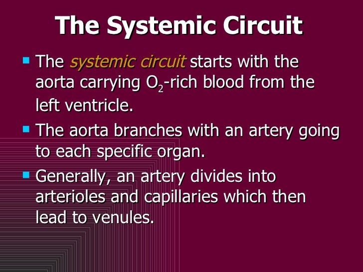 The Systemic Circuit <ul><li>The  systemic circuit  starts with the aorta carrying O 2 -rich blood from the left ventricle...