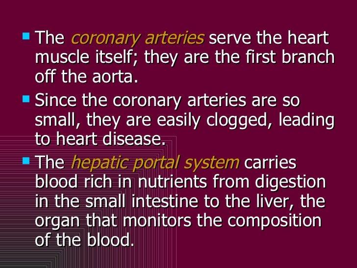<ul><li>The  coronary arteries  serve the heart muscle itself; they are the first branch off the aorta. </li></ul><ul><li>...