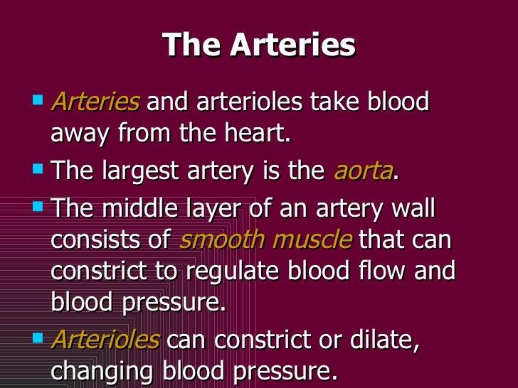 The Arteries <ul><li>Arteries  and arterioles take blood away from the heart.  </li></ul><ul><li>The largest artery is the...