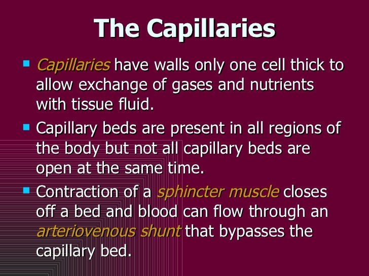 The Capillaries <ul><li>Capillaries  have walls only one cell thick to allow exchange of gases and nutrients with tissue f...