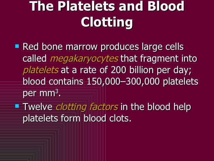 The Platelets and Blood Clotting <ul><li>Red bone marrow produces large cells called  megakaryocytes  that fragment into  ...