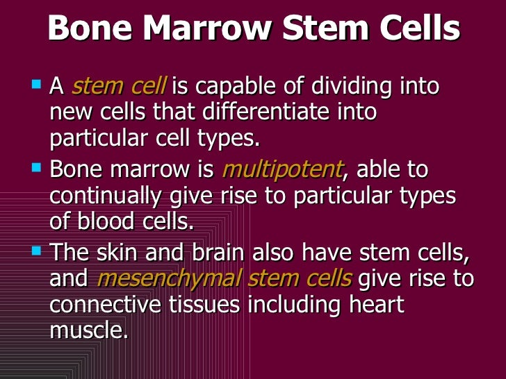 Bone Marrow Stem Cells <ul><li>A  stem cell  is capable of dividing into new cells that differentiate into particular cell...