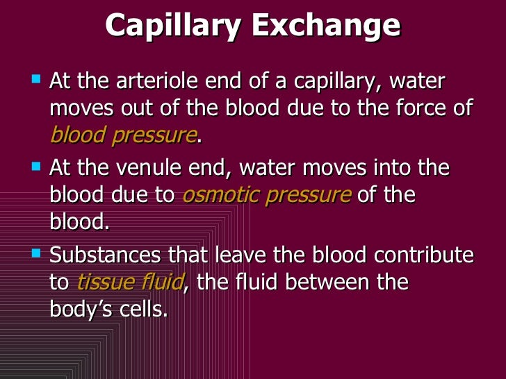 Capillary Exchange <ul><li>At the arteriole end of a capillary, water moves out of the blood due to the force of  blood pr...