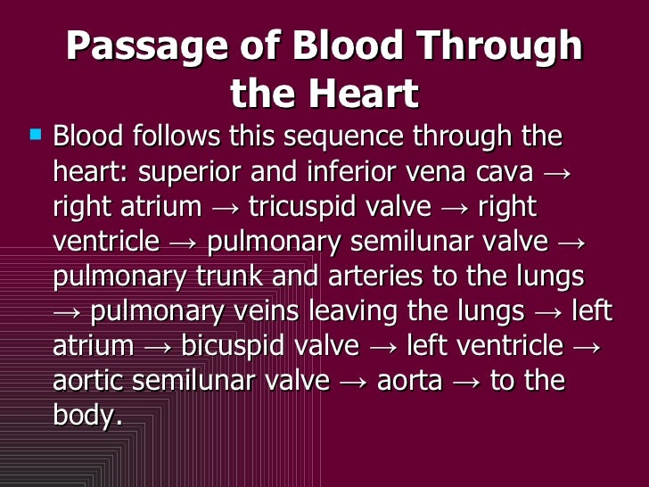 Passage of Blood Through the Heart <ul><li>Blood follows this sequence through the heart: superior and inferior vena cava ...