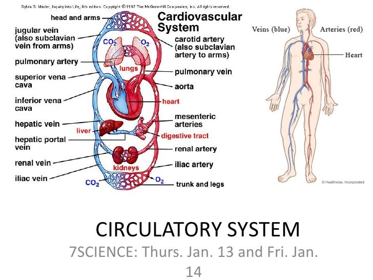 Cardiovascular system for Home circulation system