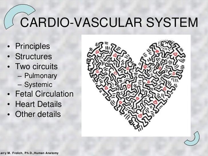 CARDIO-VASCULAR SYSTEM <ul><li>Principles </li></ul><ul><li>Structures </li></ul><ul><li>Two circuits </li></ul><ul><ul><l...