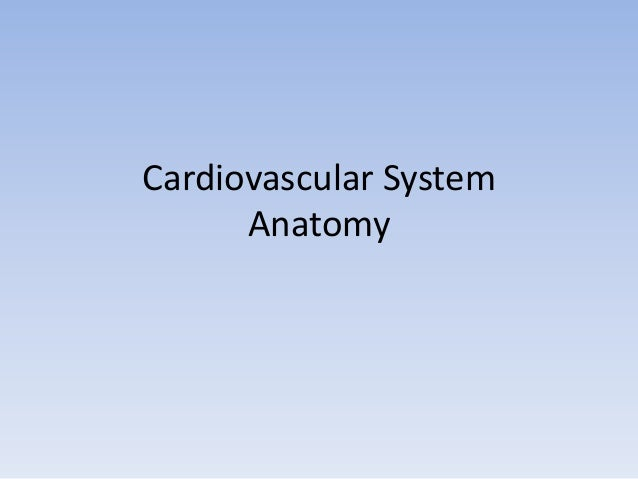 Cardiovascular System Anatomy