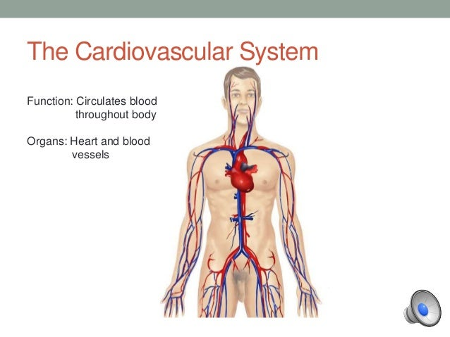 Cardiovascular system bio 120 official