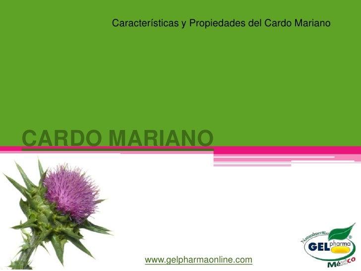 Características y Propiedades del Cardo MarianoCARDO MARIANO             www.gelpharmaonline.com