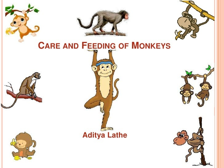 CARE AND FEEDING OF MONKEYS         Aditya Lathe