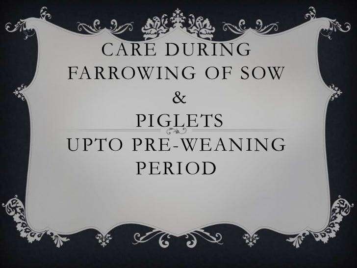 CARE DURING FARROWING OF SOW & PIGLETS UPTO PRE-WEANING PERIOD<br />
