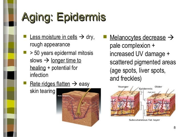 thinning skin from steroids
