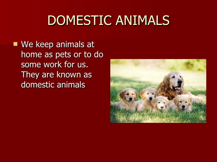 essay on protection of domestic animals Speech topic: animal abuse and cruelty specifically, i will discuss cats and dogs being abused, because they are the most abused domestic animals.