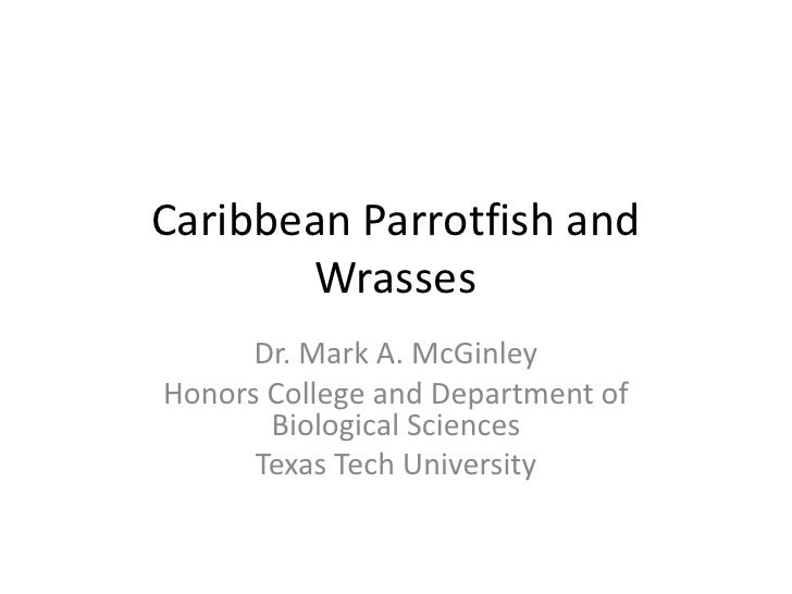Caribbean Parrotfish and       Wrasses      Dr. Mark A. McGinleyHonors College and Department of       Biological Sciences...