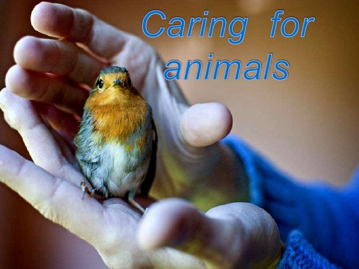 Caring for animals<br />