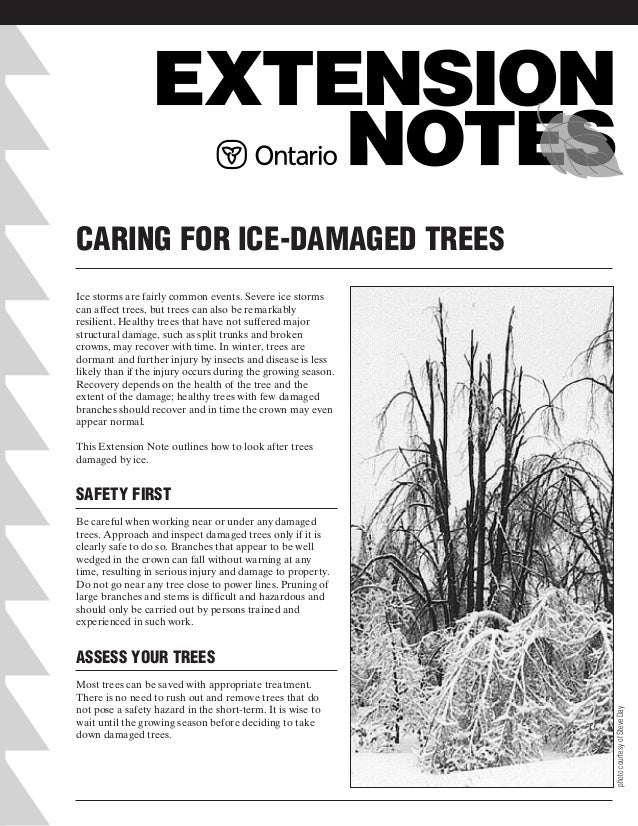 CARING FOR ICE-DAMAGED TREES Ice storms are fairly common events. Severe ice storms can affect trees, but trees can also b...