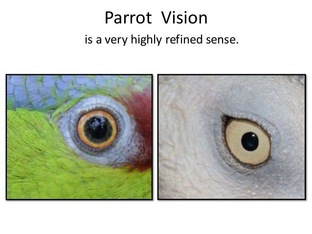 Caring for the WHOLE parrot