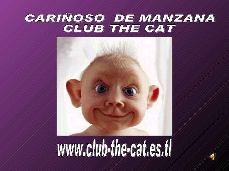 www.club-the-cat.es.tl CARIÑOSO  DE MANZANA CLUB THE CAT