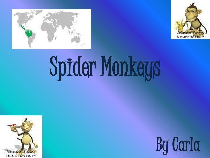 Spider Monkeys<br />ByCarla<br />