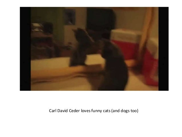 Carl David Ceder loves funny cats (and dogs too)