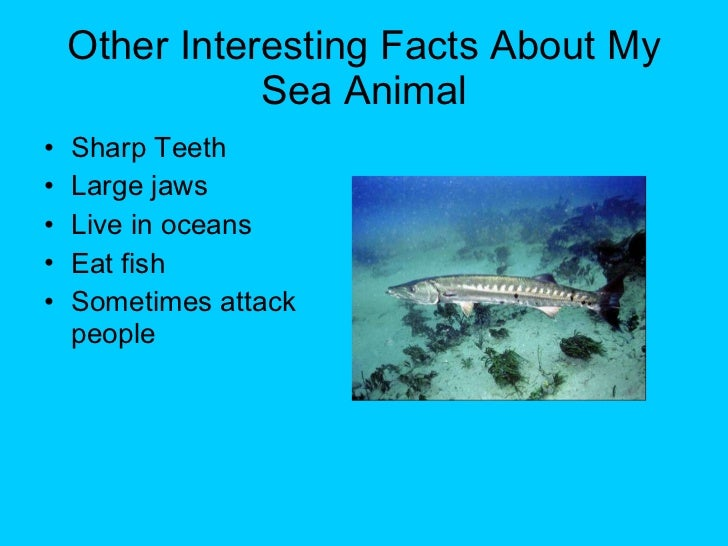 Ocean Creature Facts For Kids