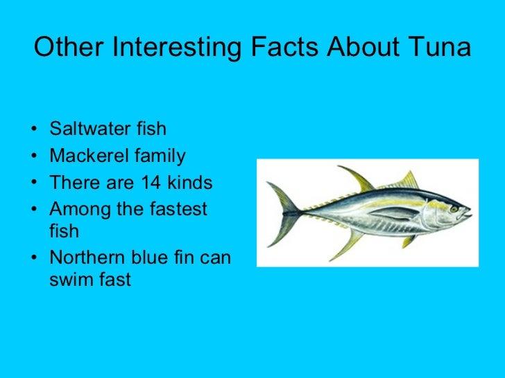 Mrs carlin grade 2 sea animals for Fun fish facts