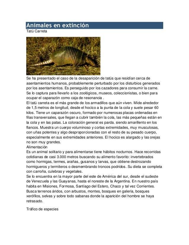 Animales en extinción Tatú Carreta Se ha presentado el caso de la desaparición de tatús que residían cerca de asentamiento...