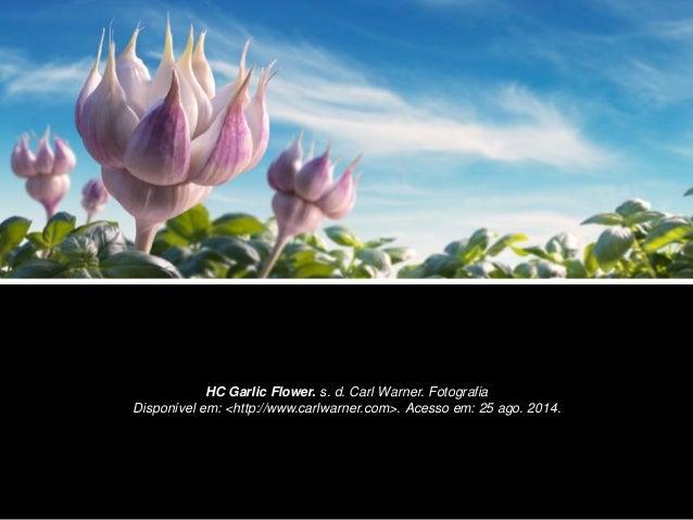 HC Garlic Flower. s. d. Carl Warner. Fotografia  Disponível em: <http://www.carlwarner.com>. Acesso em: 25 ago. 2014.