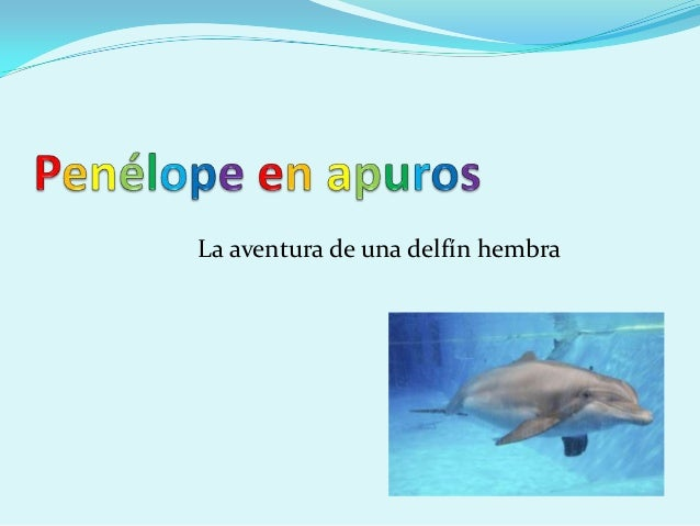 La aventura de una delfín hembra