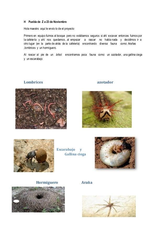 H Puebla de Z a 23 de NoviembreHola maestro aquí le envío lo de el proyectoPrimero en equipo fuimos al bosque pero no está...
