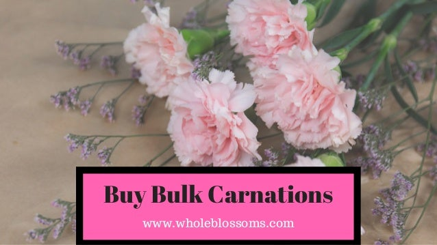 Whole Blossoms Provides Fresh Wholesale Carnations At